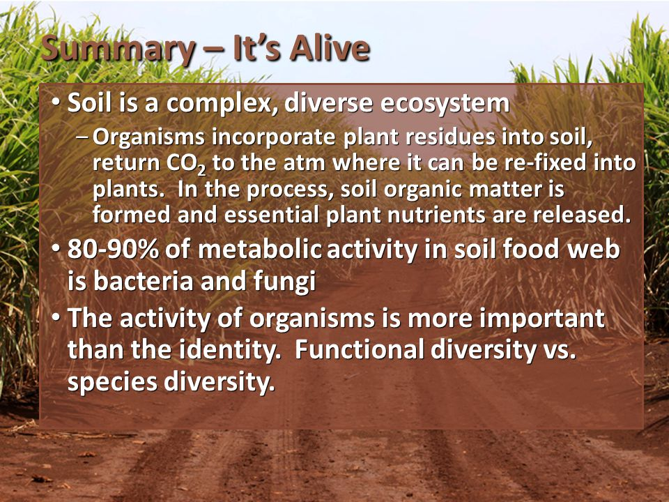 Summary – Its Alive Soil is a complex, diverse ecosystem Soil is a complex, diverse ecosystem Organisms incorporate plant residues into soil, return CO 2 to the atm where it can be re-fixed into plants.