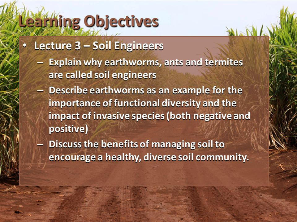 Lecture 3 - Topics Intro Soil Engineers Intro Soil Engineers Earthworms Earthworms Summary of Soil Organisms Summary of Soil Organisms
