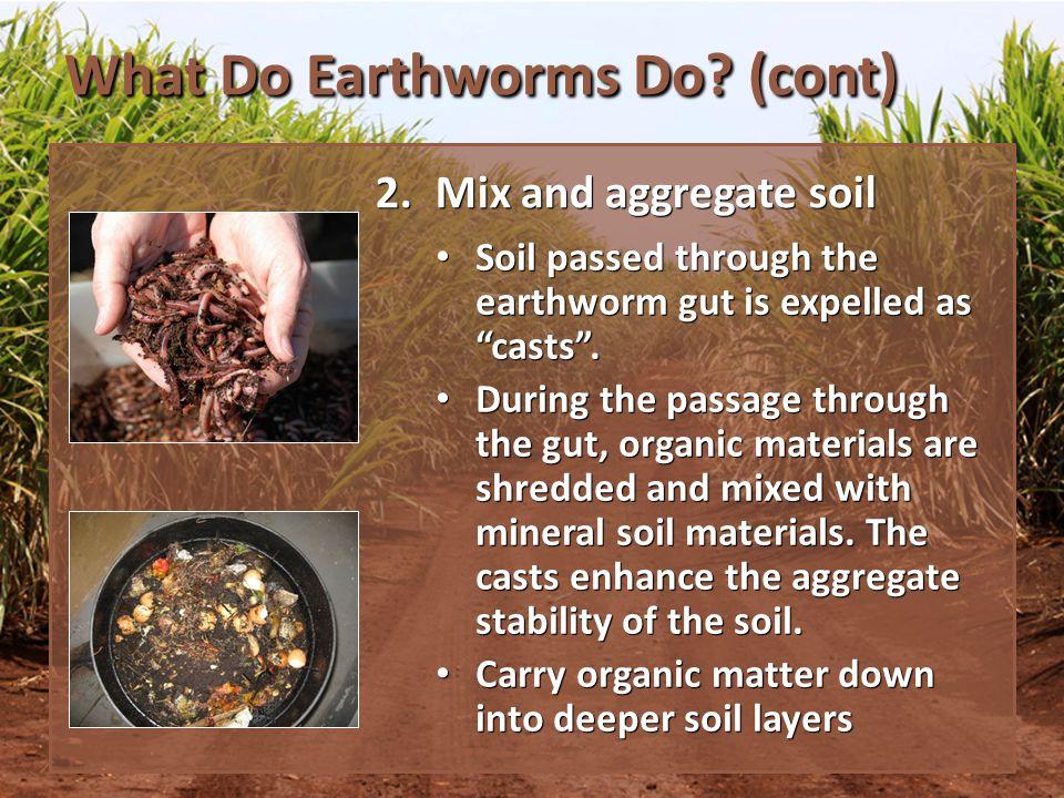 What Do Earthworms Do.