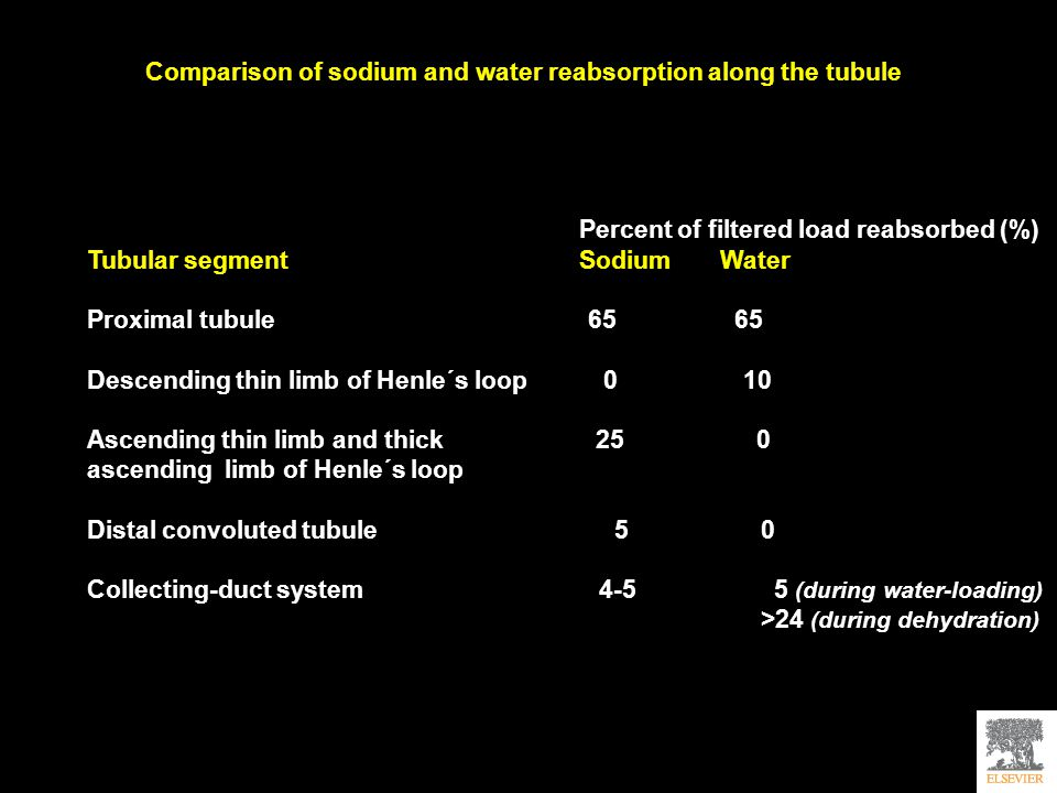 Comparison of sodium and water reabsorption along the tubule Percent of filtered load reabsorbed (%) Tubular segment Sodium Water Proximal tubule 65 65 Descending thin limb of Henle´s loop 0 10 Ascending thin limb and thick 25 0 ascending limb of Henle´s loop Distal convoluted tubule 5 0 Collecting-duct system 4-5 5 (during water-loading) >24 (during dehydration)