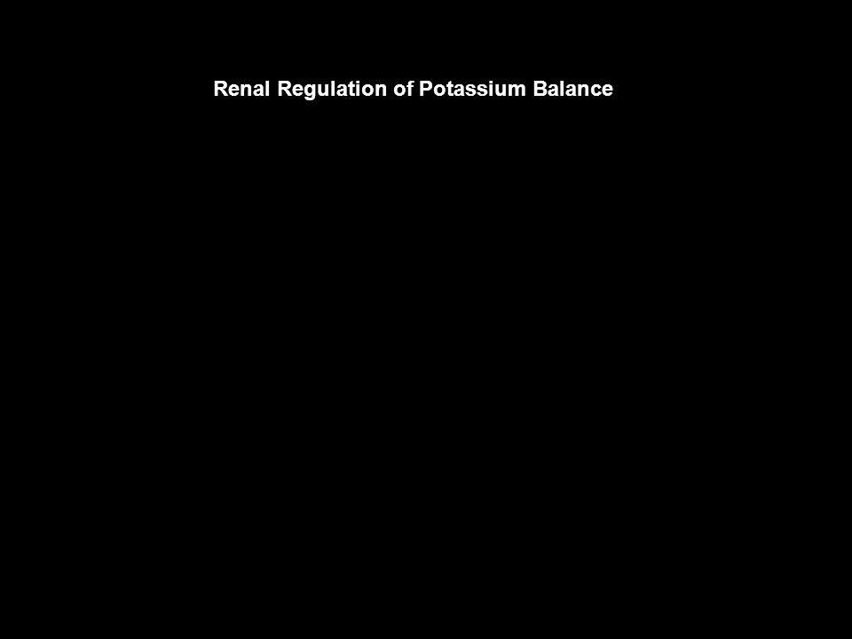 Renal Regulation of Potassium Balance