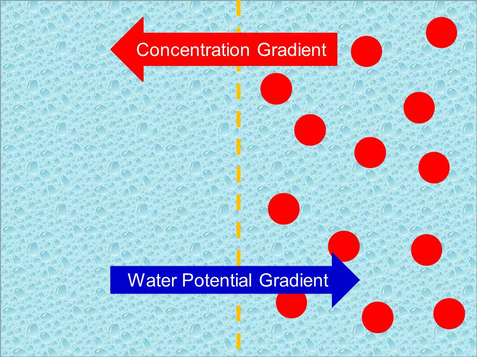 Concentration Gradient Water Potential Gradient