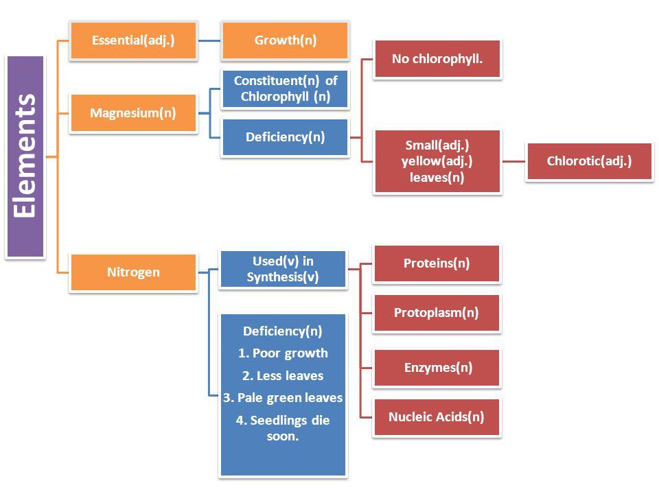 Elements Essential(adj.)Growth(n) Magnesium(n) Constituent(n) of Chlorophyll (n) Deficiency(n) No chlorophyll.