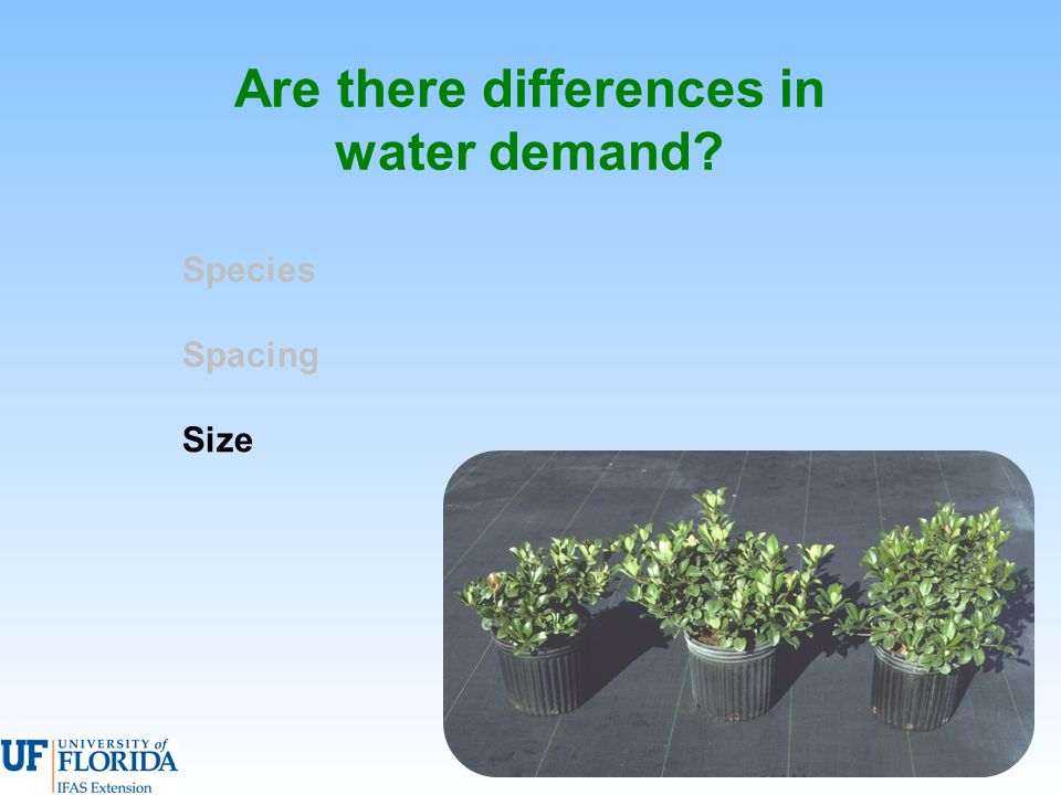 Are there differences in water demand Species Spacing Size
