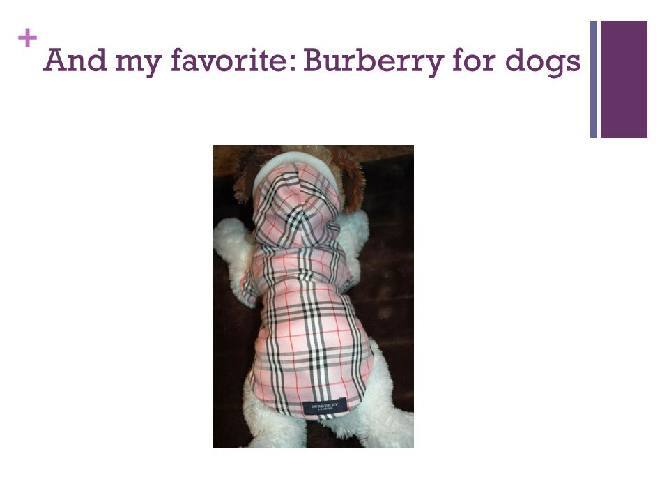 + And my favorite: Burberry for dogs