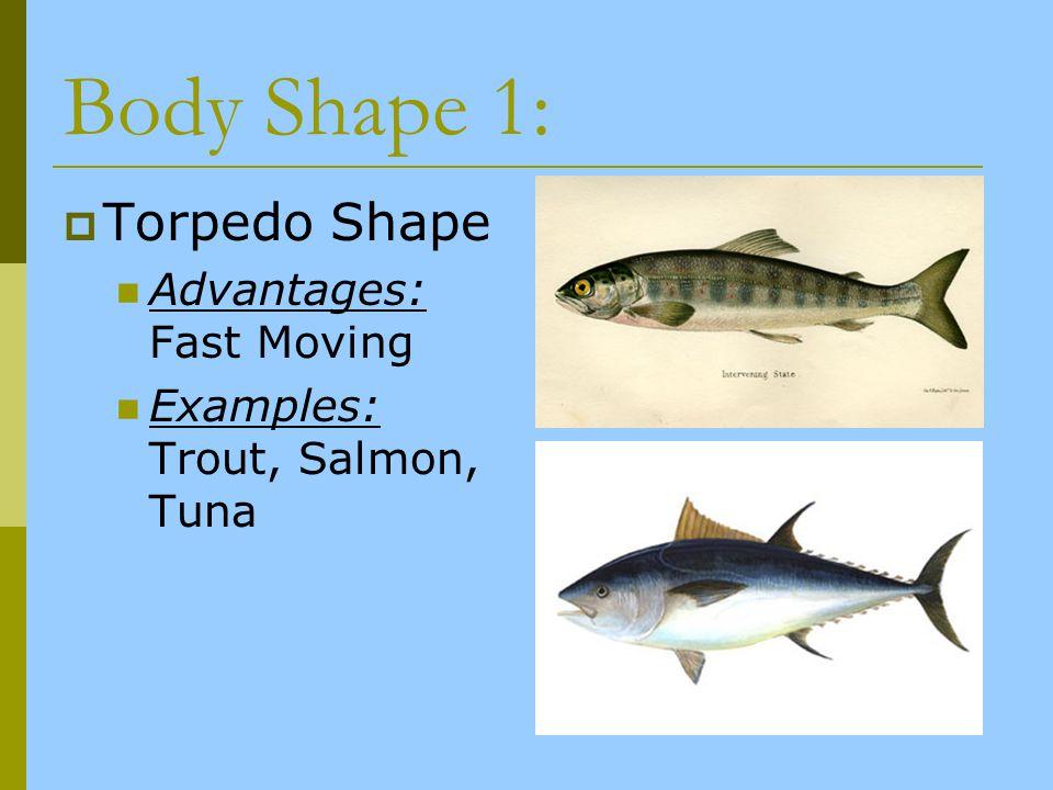 Body Shape 1: Torpedo Shape Advantages: Fast Moving Examples: Trout, Salmon, Tuna
