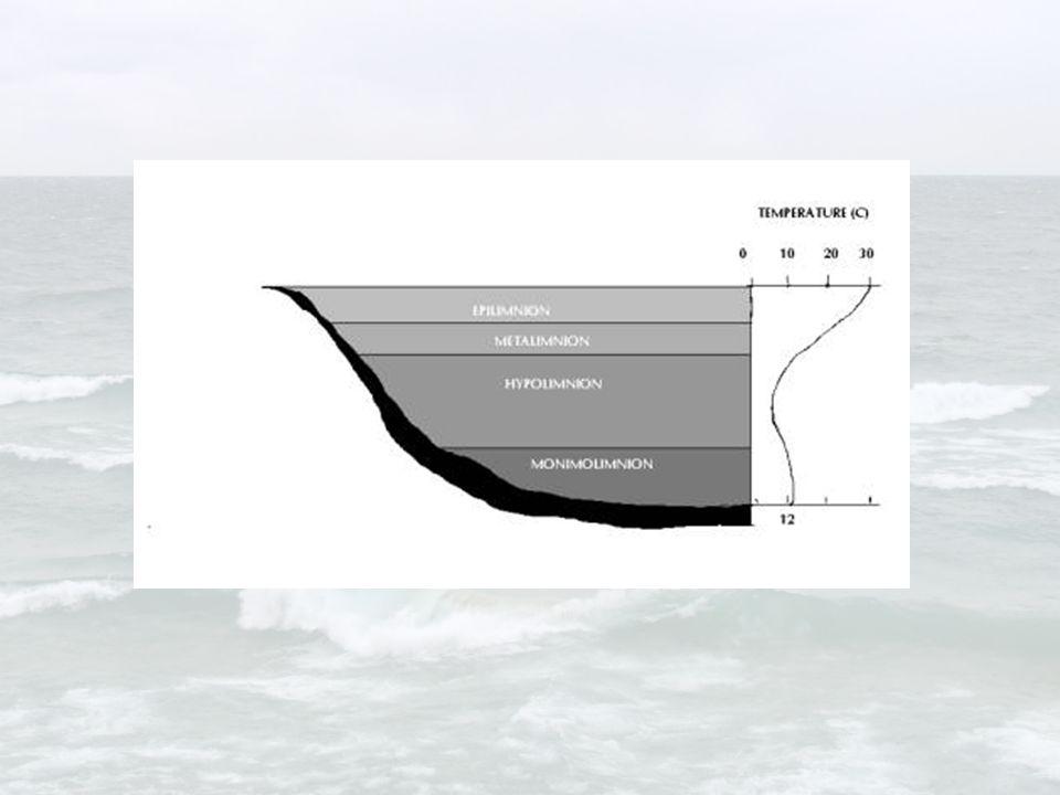 Coriolis Effect on water movement