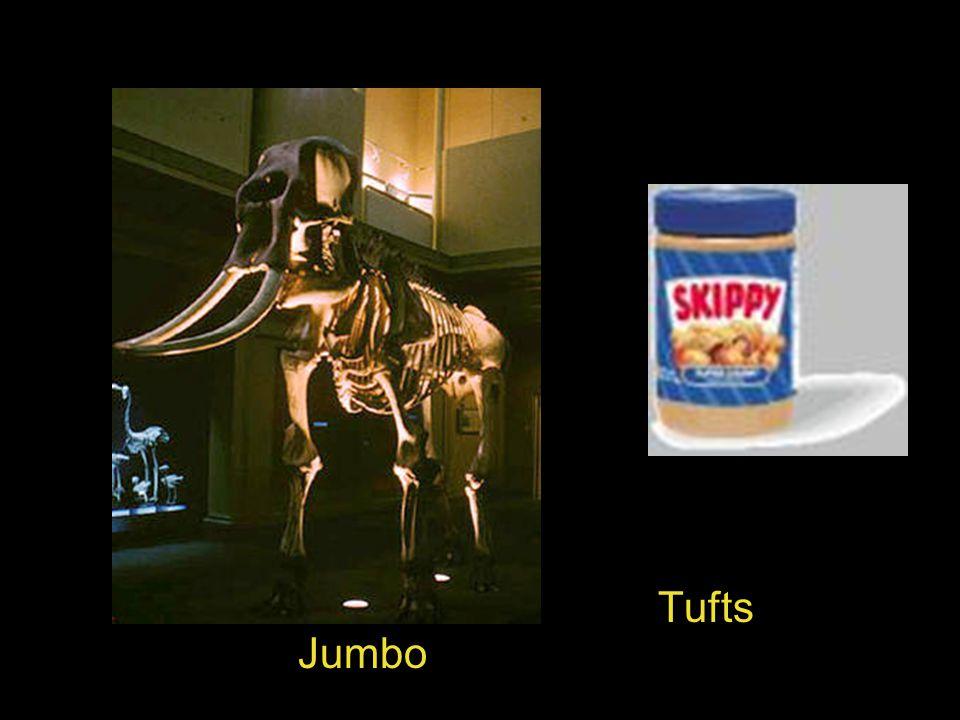 » Tufts Jumbo