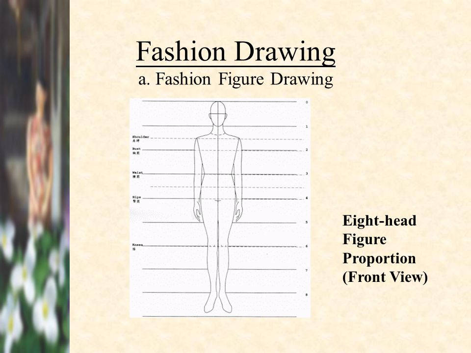 Fashion Drawing a. Fashion Figure Drawing Eight-head Figure Proportion (Front View)