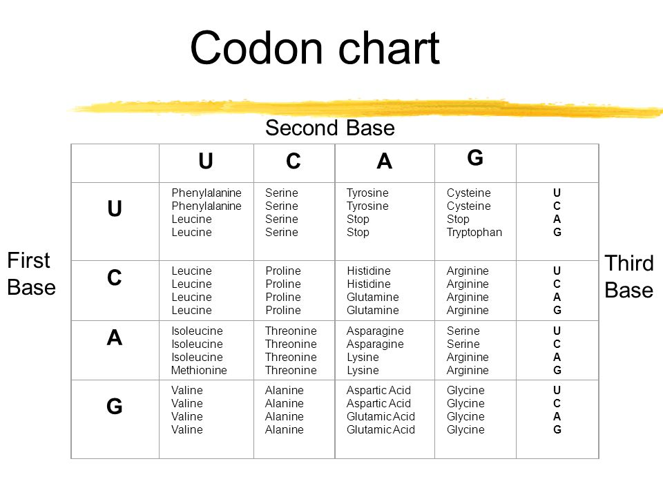Whats a codon, anyway. zHere is what a codon looks like.