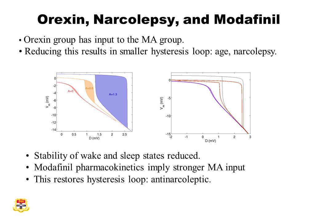 Orexin, Narcolepsy, and Modafinil Orexin group has input to the MA group.