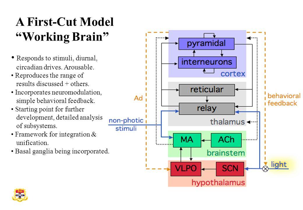 A First-Cut Model Working Brain Responds to stimuli, diurnal, circadian drives.