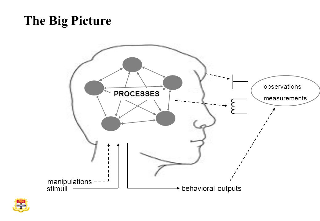 stimuli behavioral outputs manipulations observations measurements PROCESSES The Big Picture