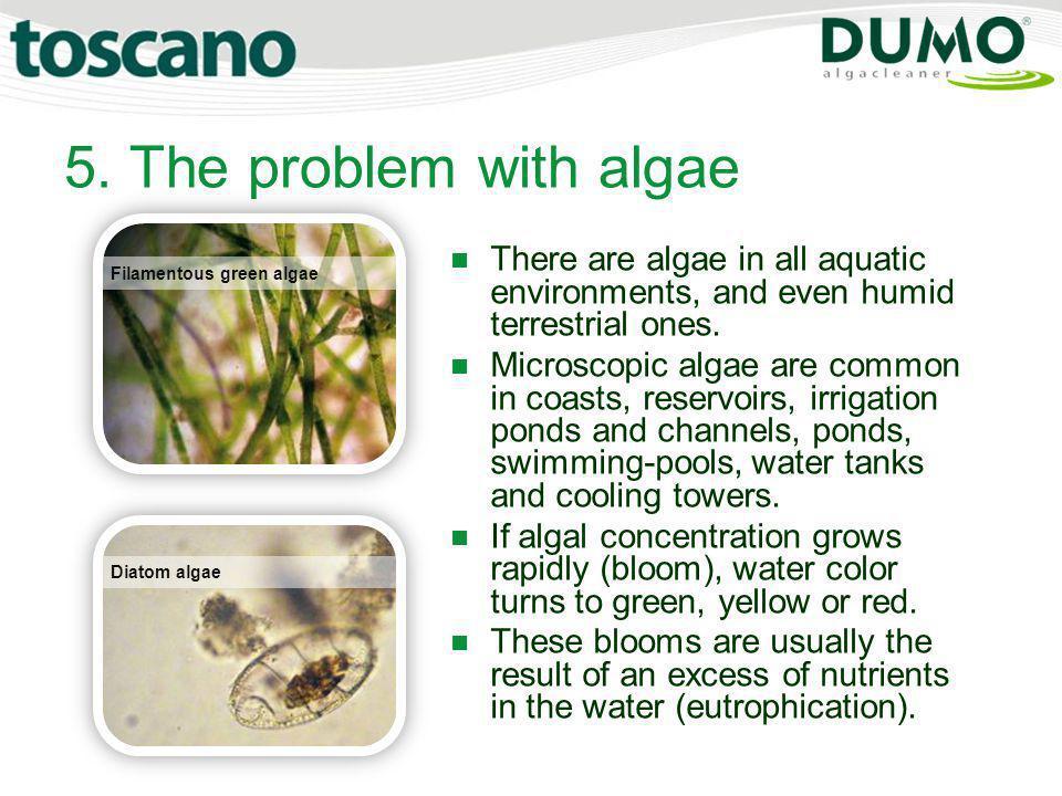 5. The problem with algae Filamentous green algae Diatom algae There are algae in all aquatic environments, and even humid terrestrial ones. Microscop