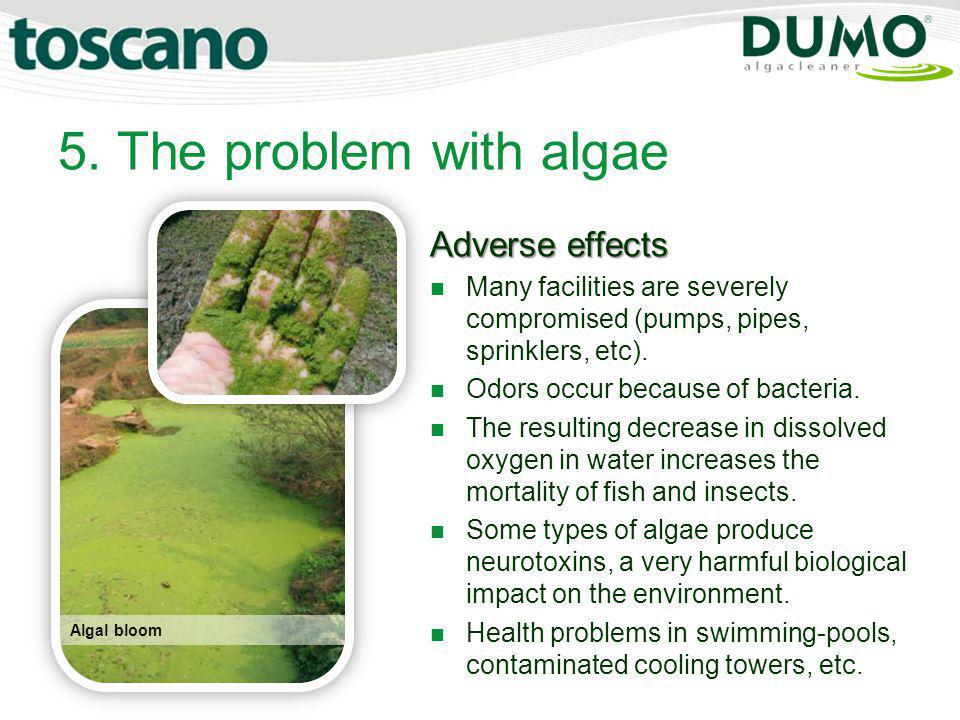 5. The problem with algae Algal bloom Adverse effects Many facilities are severely compromised (pumps, pipes, sprinklers, etc). Odors occur because of