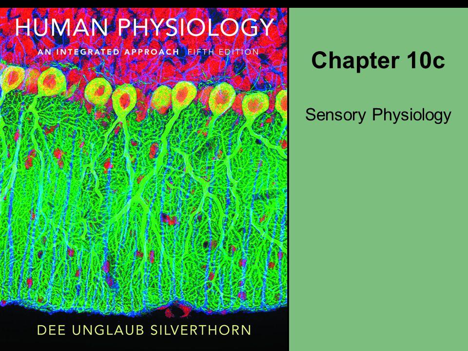 The Ear: Equilibrium Vestibular apparatus Semicircular canals Otolith organs Equilibrium pathways