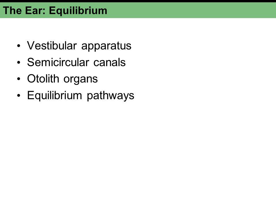 The Electromagnetic Spectrum Figure 10-36