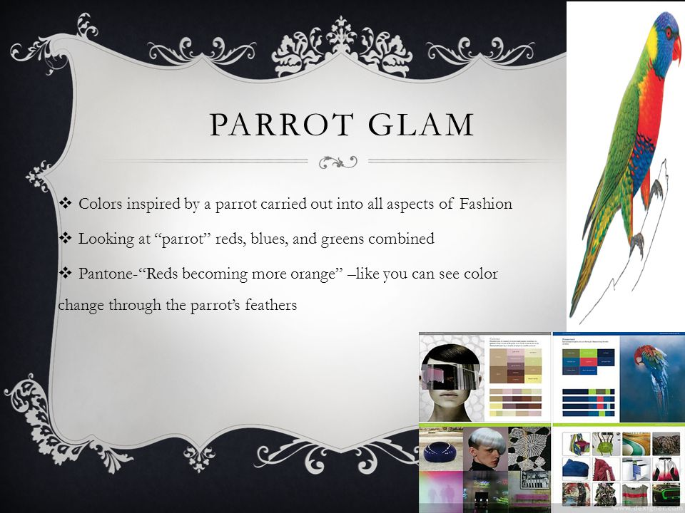 PARROT GLAM Colors inspired by a parrot carried out into all aspects of Fashion Looking at parrot reds, blues, and greens combined Pantone-Reds becoming more orange –like you can see color change through the parrots feathers