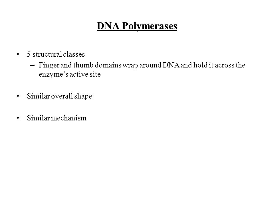 DNA Polymerases 5 structural classes – Finger and thumb domains wrap around DNA and hold it across the enzymes active site Similar overall shape Simil