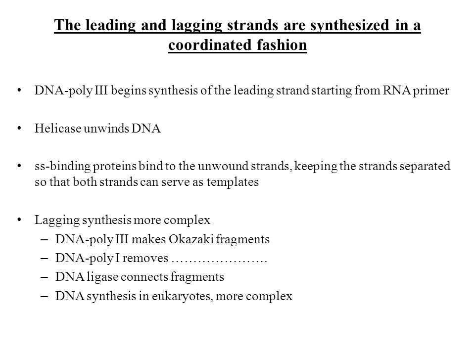DNA-poly III begins synthesis of the leading strand starting from RNA primer Helicase unwinds DNA ss-binding proteins bind to the unwound strands, kee
