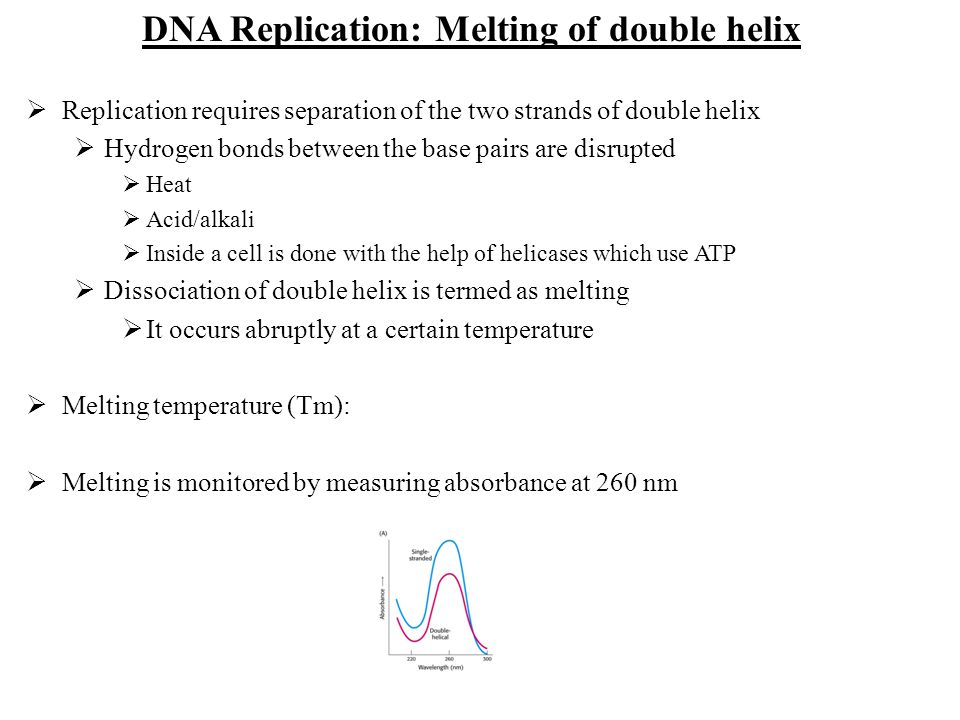 Replication requires separation of the two strands of double helix Hydrogen bonds between the base pairs are disrupted Heat Acid/alkali Inside a cell