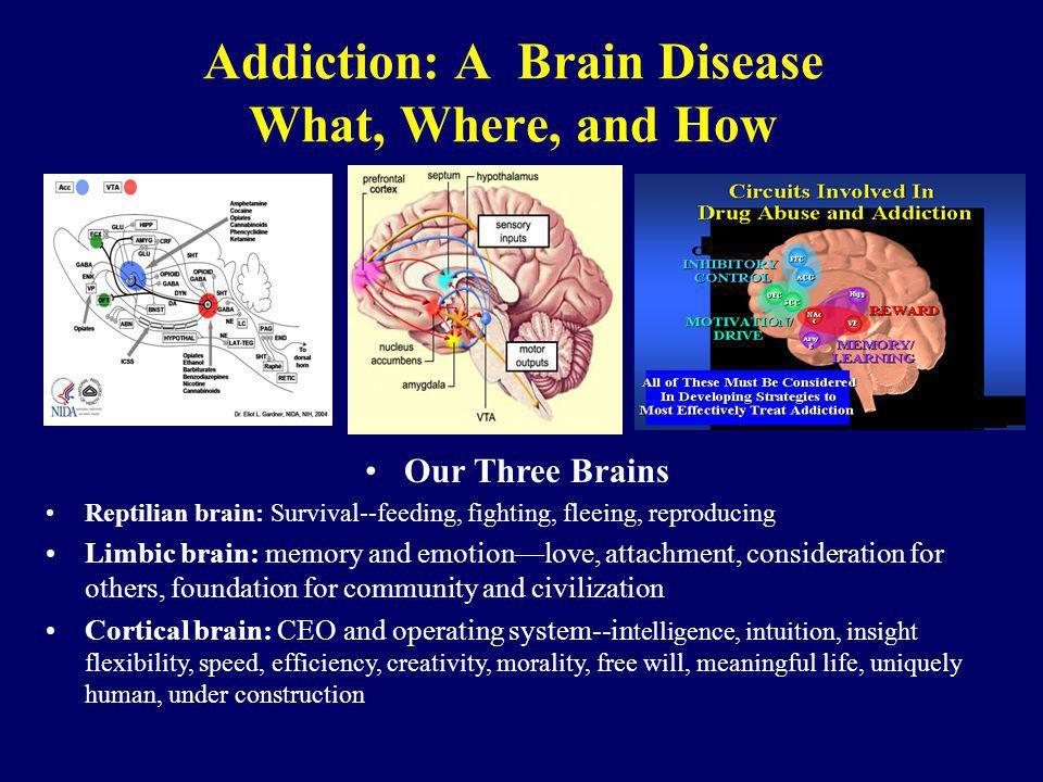 Addiction: A Brain Disease What, Where, and How Our Three Brains Reptilian brain: Survival--feeding, fighting, fleeing, reproducing Limbic brain: memo