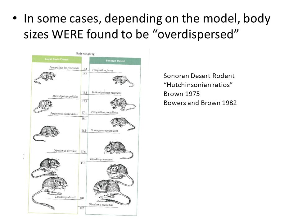 In some cases, depending on the model, body sizes WERE found to be overdispersed Sonoran Desert Rodent Hutchinsonian ratios Brown 1975 Bowers and Brow