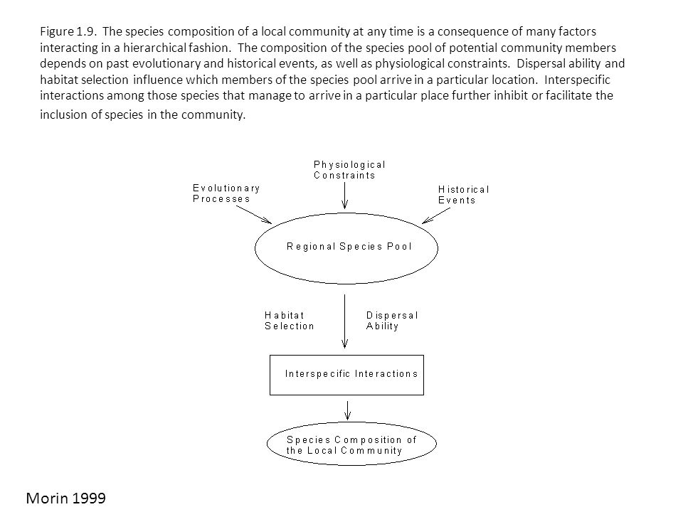 Figure 1.9. The species composition of a local community at any time is a consequence of many factors interacting in a hierarchical fashion. The compo