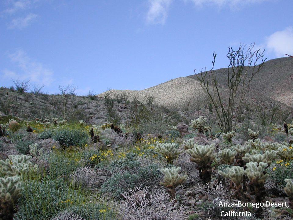 Anza-Borrego Desert, California