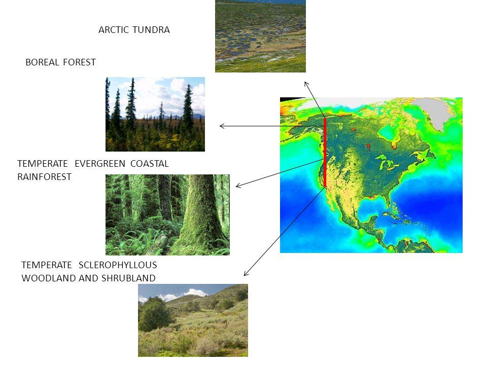 Wooton analyzed feeding patterns of 17 species of birds, same island as Paine