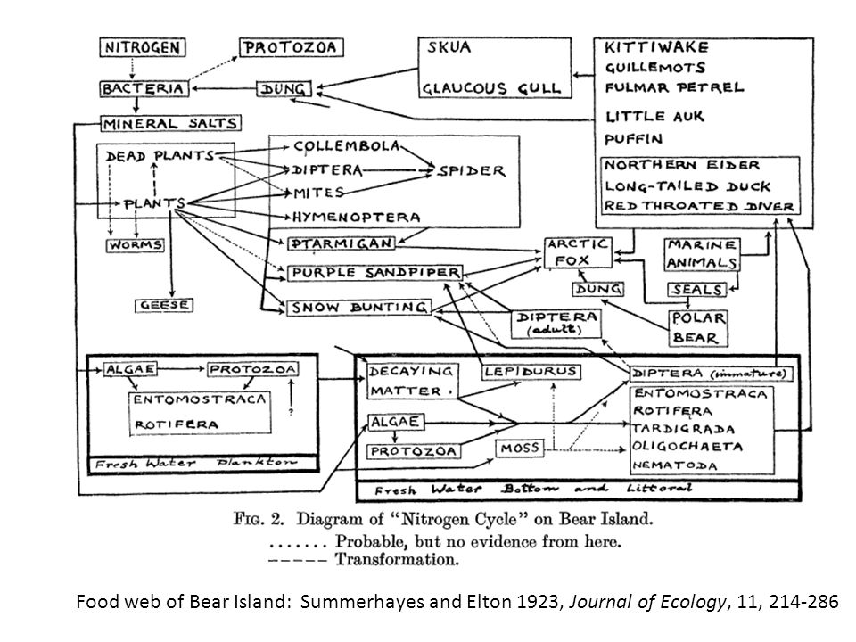 Food web of Bear Island: Summerhayes and Elton 1923, Journal of Ecology, 11, 214-286