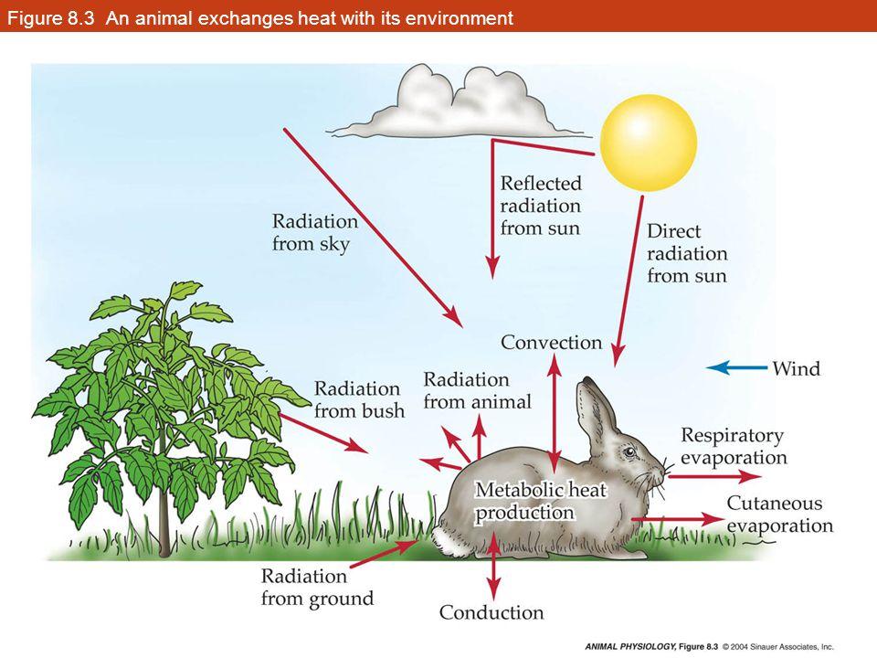 Figure 8.34 Seasonal acclimatization in two species of mammals (Part 2)