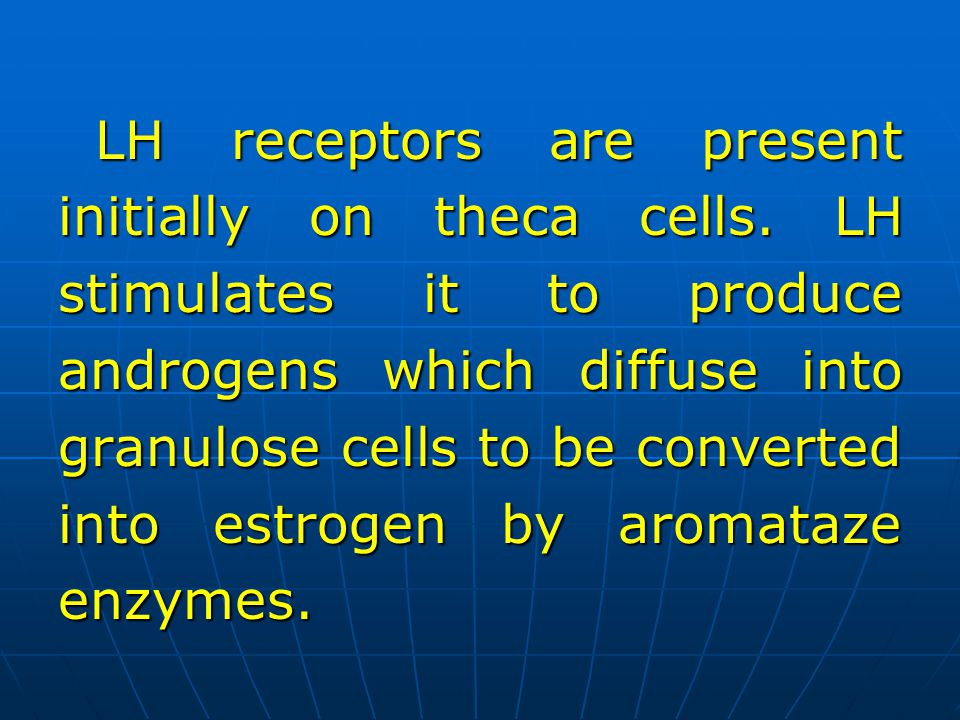 LH receptors are present initially on theca cells. LH stimulates it to produce androgens which diffuse into granulose cells to be converted into estro
