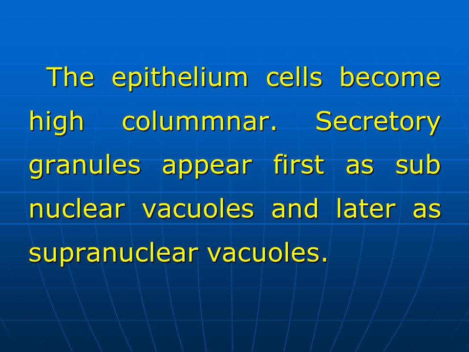 The epithelium cells become high colummnar. Secretory granules appear first as sub nuclear vacuoles and later as supranuclear vacuoles.