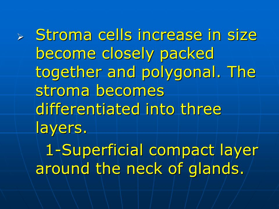 Stroma cells increase in size become closely packed together and polygonal. The stroma becomes differentiated into three layers. Stroma cells increase