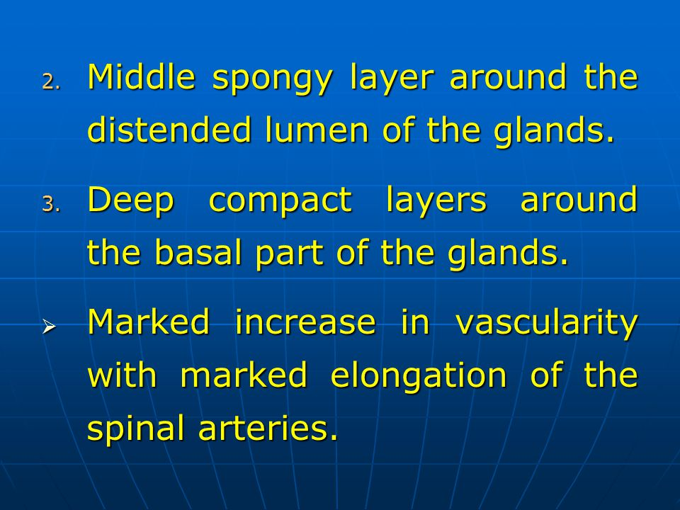 2. Middle spongy layer around the distended lumen of the glands. 3. Deep compact layers around the basal part of the glands. Marked increase in vascul