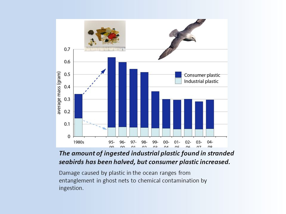 The amount of ingested industrial plastic found in stranded seabirds has been halved, but consumer plastic increased.