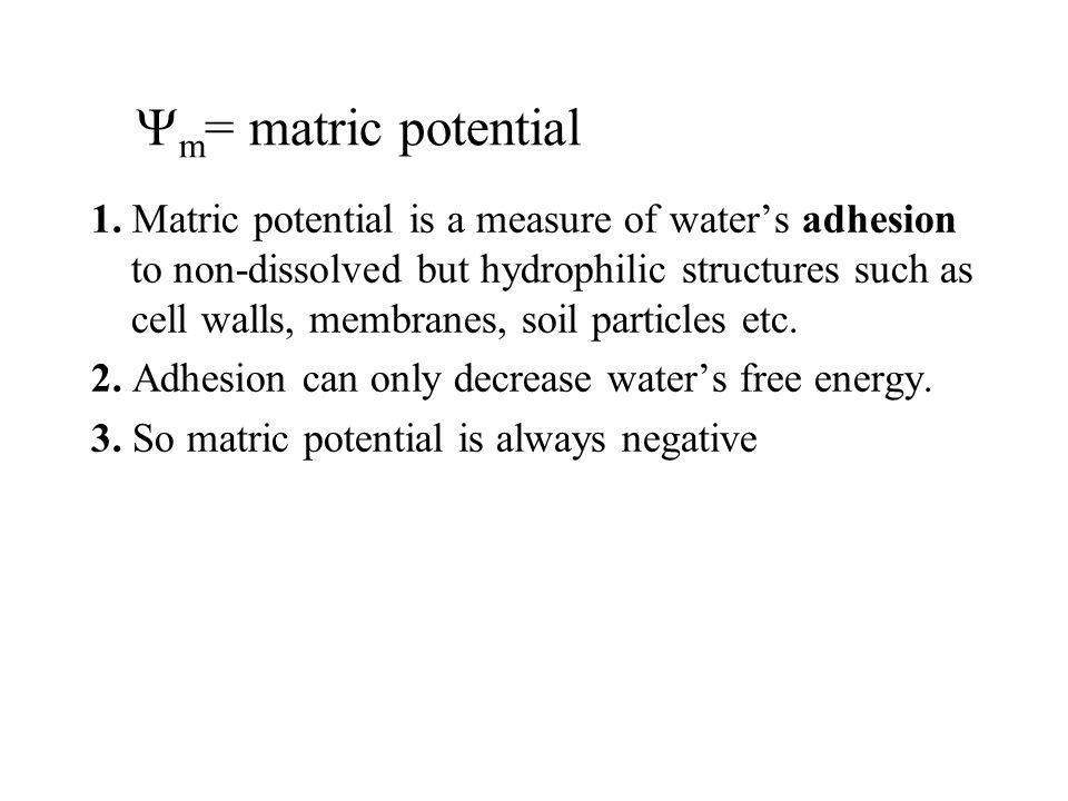 m = matric potential 1. Matric potential is a measure of waters adhesion to non-dissolved but hydrophilic structures such as cell walls, membranes, so