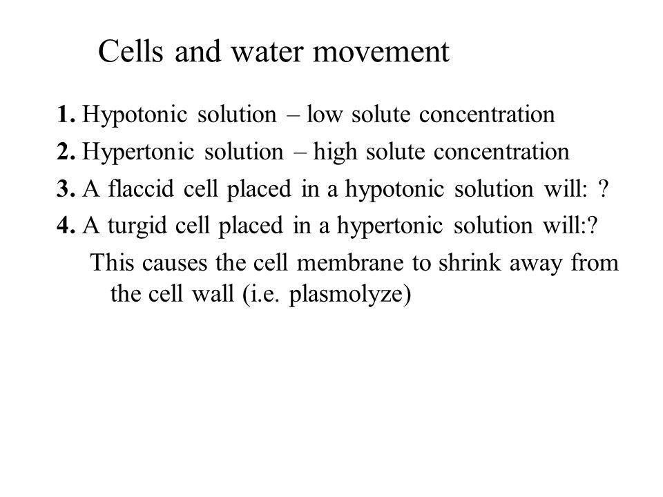Cells and water movement 1. Hypotonic solution – low solute concentration 2. Hypertonic solution – high solute concentration 3. A flaccid cell placed