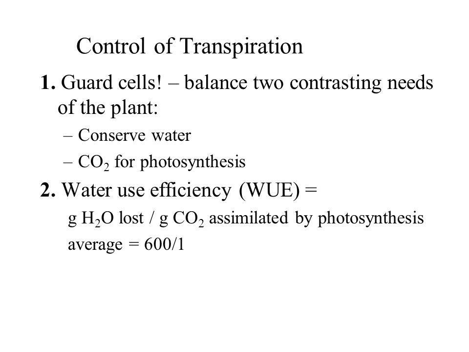 Control of Transpiration 1. Guard cells! – balance two contrasting needs of the plant: –Conserve water –CO 2 for photosynthesis 2. Water use efficienc