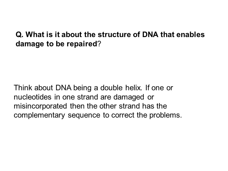 Q. What is it about the structure of DNA that enables damage to be repaired? Think about DNA being a double helix. If one or nucleotides in one strand