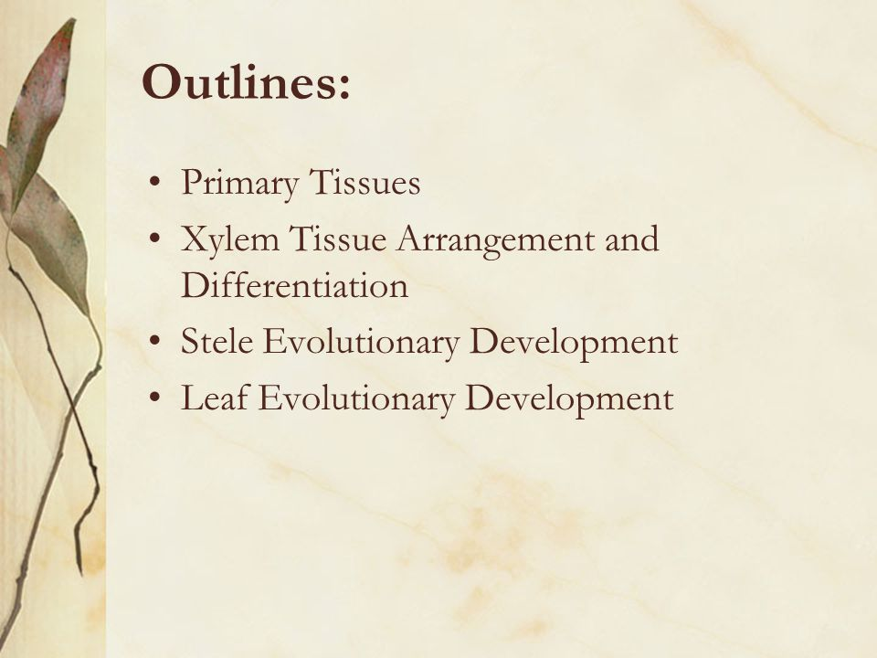Outlines: Primary Tissues Xylem Tissue Arrangement and Differentiation Stele Evolutionary Development Leaf Evolutionary Development