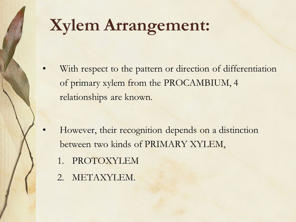 Xylem Arrangement: With respect to the pattern or direction of differentiation of primary xylem from the PROCAMBIUM, 4 relationships are known. Howeve