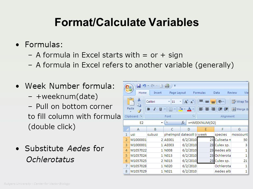 Rutgers University - Center for Vector Biology Format/Calculate Variables Formulas: –A formula in Excel starts with = or + sign –A formula in Excel re