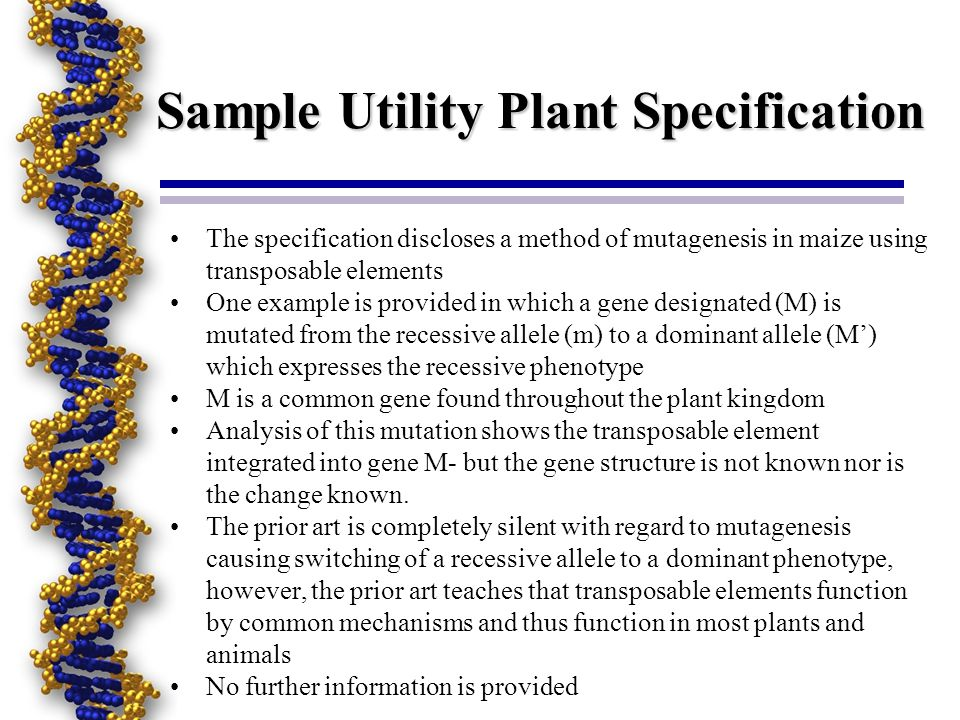 Sample Utility Plant Specification The specification discloses a method of mutagenesis in maize using transposable elements One example is provided in