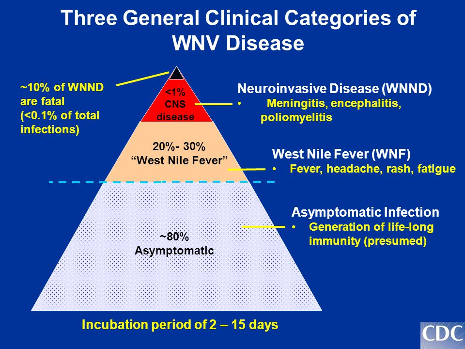 Three General Clinical Categories of WNV Disease ~80% Asymptomatic 20%- 30% West Nile Fever <1% CNS disease Neuroinvasive Disease (WNND) Meningitis, encephalitis, poliomyelitis West Nile Fever (WNF) Fever, headache, rash, fatigue Asymptomatic Infection Generation of life-long immunity (presumed) ~10% of WNND are fatal (<0.1% of total infections) Incubation period of 2 – 15 days