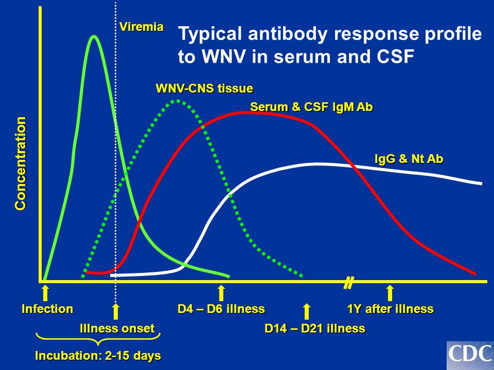 Infection Illness onset D4 – D6 illness 1Y after illness Viremia Serum & CSF IgM Ab IgG & Nt Ab D14 – D21 illness Concentration WNV-CNS tissue Incubation: 2-15 days Typical antibody response profile to WNV in serum and CSF