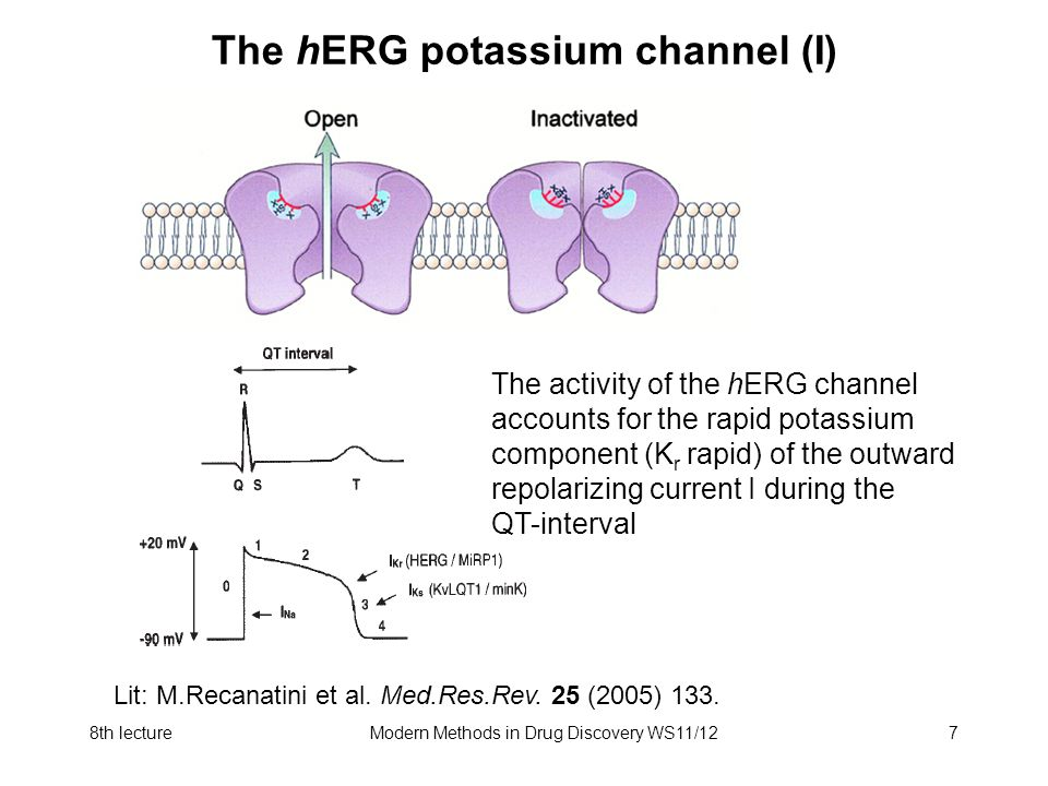 8th lectureModern Methods in Drug Discovery WS11/127 The hERG potassium channel (I) The activity of the hERG channel accounts for the rapid potassium
