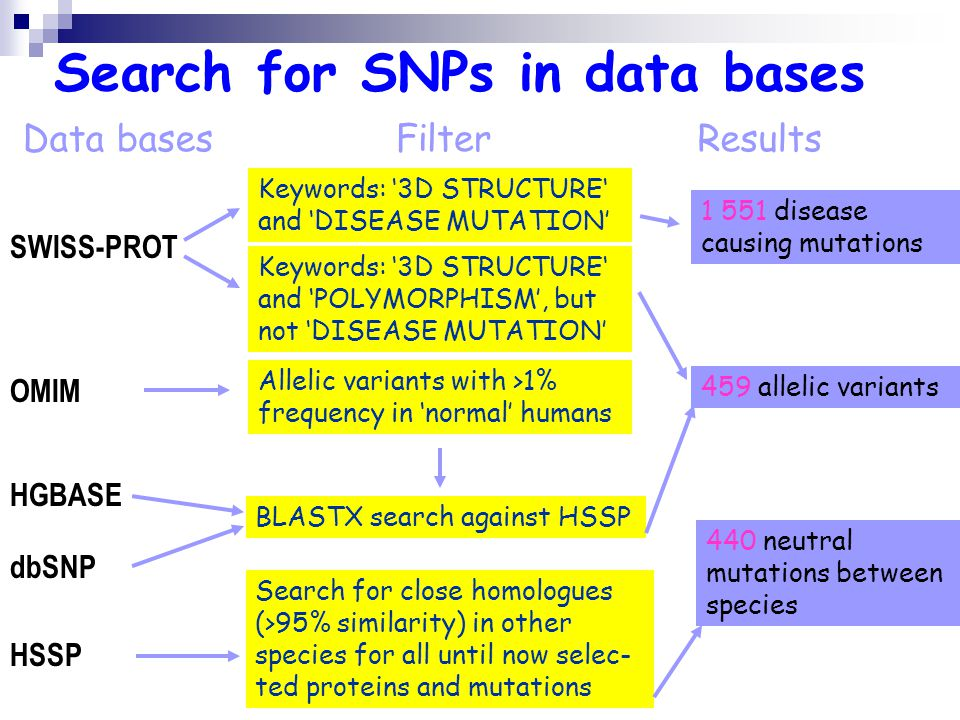 Search for SNPs in data bases SWISS-PROT Data bases OMIM HGBASE dbSNP HSSP Filter Keywords: 3D STRUCTURE and DISEASE MUTATION Results Keywords: 3D STRUCTURE and POLYMORPHISM, but not DISEASE MUTATION Allelic variants with >1% frequency in normal humans BLASTX search against HSSP Search for close homologues (>95% similarity) in other species for all until now selec- ted proteins and mutations 1 551 disease causing mutations 459 allelic variants 440 neutral mutations between species