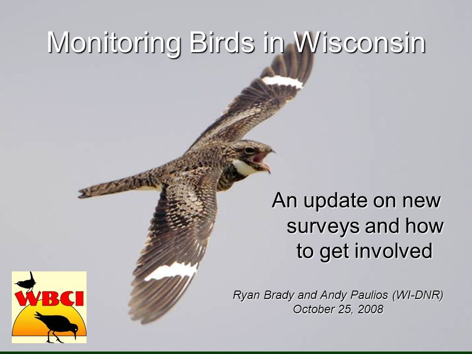 Monitoring Birds in Wisconsin An update on new surveys and how to get involved Ryan Brady and Andy Paulios (WI-DNR) October 25, 2008